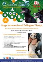 Stage introduttivo di Tellington Touch®